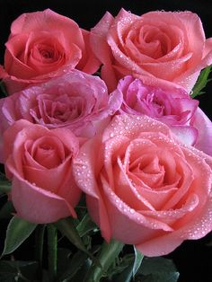 Breathtakingly beautiful!!! Seriously in love with pink roses!