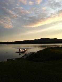 Moose Amerika www.reiseinspiration.ch Ideen die beflügeln!