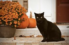 I doubt I will, but I really hope that I'll see a black cat this year🐱 Halloween House, Cute Halloween, Halloween Costumes, Slytherin, Cat Pumpkin, Pumpkin Spice, Autumn Cozy, Autumn Fall, Winter