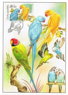 Birds Perched, Birds Flying, Birds aground - Stamp Community Forum - Page 24 Parrot Painting, Flying Birds, Bird Perch, Budgies, Exotic, Community, Stamp, Illustration, Color