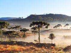 Dia começou com temperatura negativa em Urupema (Foto: Marília Oliveira/Prefeitura de Urupema)