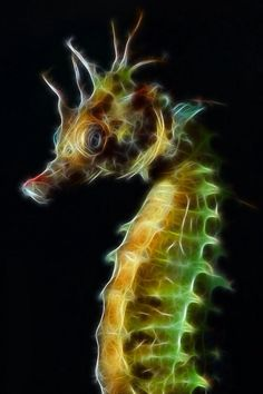 Seahorse: balance through all currents and tides in your life.