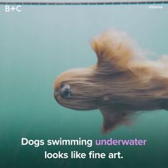 Dogs can do it all! How cool i s this a look under water at our dog swimming its brilliant Funny Animal Memes, Cute Funny Animals, Funny Animal Pictures, Cute Baby Animals, Funny Cute, Funny Dogs, Weird Dogs, Funny Memes, Super Funny