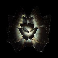 Blooms of Butterflies Wings – Fubiz Media