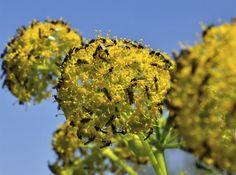 11 allmänna tips mot sorgmyggor