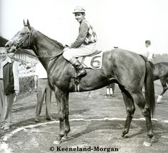Native Dancer wins the 1952 Flash Stakes at Saratoga. His only loss next year would be in the Kentucky Derby against Dark Star. (morgan-keeneland photo)