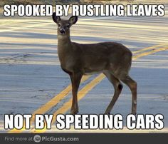 Why?? I kinda hate deer. Lol That's why it doesn't bother me to eat them. :P