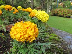 O verde e amarelo de um Brasil florido!