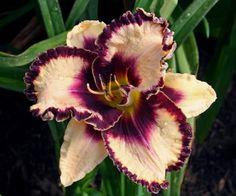 August Birth Flower   Gladiolus August Pinterest
