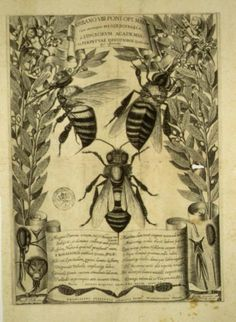 microscopic studies of bees in a Tuscan translation of an obscure Latin poem in 1630.