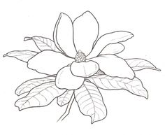 magnolia flower outline - Google Search