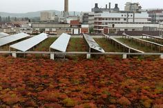 Green & Brown Roof mitigation ideas