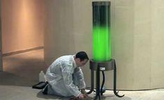 Lâmpada fabricada com algas promete diminuir quantidade de CO2 no ar