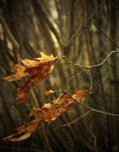 .Autumns spell...