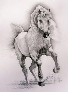 graphite pencil drawing- grey equestrian art