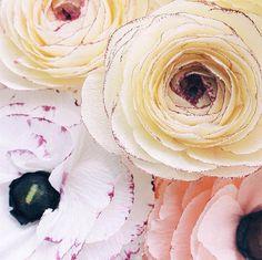 12 Paper Flower Artists to Follow on Instagram | Design*Sponge (A Petal Unfolds)