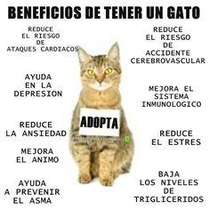 Adopta un gatito!