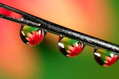 beauty in reflection