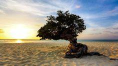 Awesome Beaches around the World #1