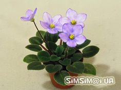 Beauty will save the world!!!: VIOLETS(mini)