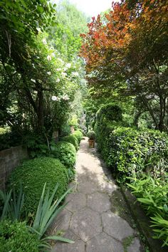 Garden Walkway with Roses, Boxwoods and Trees