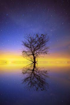 Alone tree by Chaiyun Damkaew on 500px