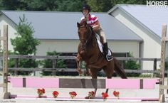 The ABCs of Training a Horse to Jump A step-by-step approach to introducing a green horse to jumping.