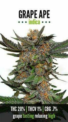 Buy Medical Marijuana,OG Kush,Buy Real Weed Online,Marijuana Edibles,Cannabis Seeds,Cannabis Oil,Purple Kush and a lot more. To place An Order Go To : Website: https://www.realweedshop.com Call/Text:+1 (513) 392-0789