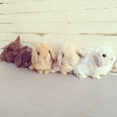 Buns in a row.
