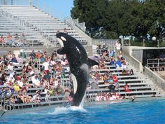 10 tips for surviving SeaWorld san diego