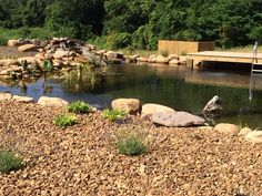 Another view of this crystal clear all natural ORGANIC Recreational Swimming Pond! filtered by plants and biological filtration! Call me to learn more - Natural Swimming Ponds, Swimming Pools, Pool Porch, Backyard Ponds, Dream Pools, Decks And Porches, Cool Pools, Water Garden, Water Features