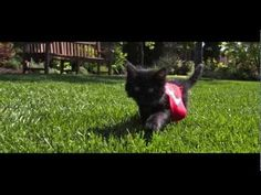 What do you get when you put superhero capes on cute kittens, and then shoot them jumping in slow motion to a dubstep soundtrack? Today's diversion, that's what.