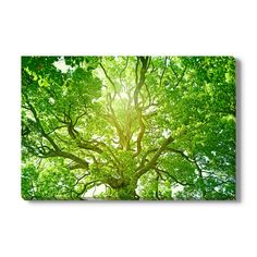 Gallery Direct Tree of Light Photographic Print on Wrapped Canvas Size: Tree Canvas, Canvas Art, Tree Lighting, Office Art, All Wall, Cool Walls, Metal Wall Art, Canvas Size, Wrapped Canvas