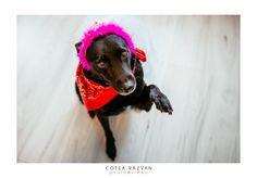 #fotograf #nunta #foto #cotearazvan https://www.cotearazvan.ro/?utm_content=buffer91e8b&utm_medium=social&utm_source=pinterest.com&utm_campaign=buffer https://fotografnunta.info/?utm_content=buffer2ba09&utm_medium=social&utm_source=pinterest.com&utm_campaign=buffer