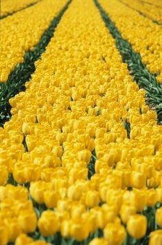 JULES & JENN - mode responsable en toute transparence // Yellow tulips • www.julesjenn.com