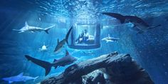 Underwater Airbnb - Sleep With The Sharks
