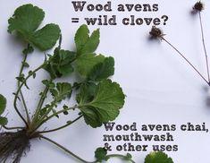 Wild Plant Forager -