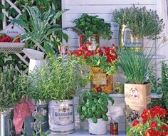 Cool Garden Ideas: Vintage food cans with the lids removed make interesting herb planters.