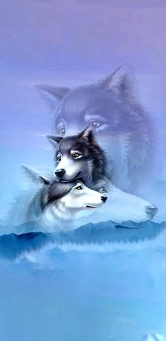 Wolf Wallpaper, Wolf Spirit, Wolves, Husky, Wallpapers, Dogs, Animals, Costumes, Animales