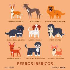 Perros Ibéricos.