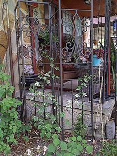 gazebo frame re purposed into garden trellises, gardening, 4 Trellis on the East side of the porch with Jasmine and Porcelain Vine