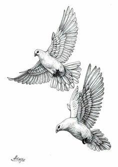 Vögel  Vögel