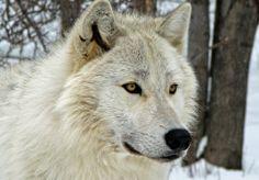 Keisha fucks damien wolf