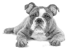 Open Edition Giclée Print Printed on Acid-free Archival Paper. Mounted using conservation level cream mountboard. Black And White Sketches, Black And White Dog, Dog Poses, Animal Drawings, Dog Drawings, Drawing Animals, Pencil Drawings, Bulldog Puppies, Dog Paintings