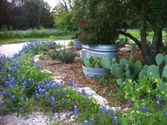 Circular front drive Texas Hill Country style.