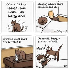 What makes a cat happy. Accurate.