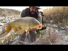 Kosova Batlava Gölü Sazan Avı Float Fishing For Carp Carp, Aquarium, Fishing, Aquarius, Fish Tank, Fishing Rods, Common Carp, Peach, Pisces