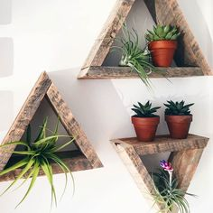 Happy little plant babies on some barnwood triangle shelves.