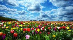 Olanda : i luoghi patrimonio dell' Unesco