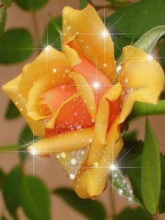 Anne Yin Dee - Google+ - Cool Morning Breeze And Pearly Dew Drops, Waving Green…
